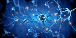Theridion Curassavicum & Neurolgical Hyperesthesia